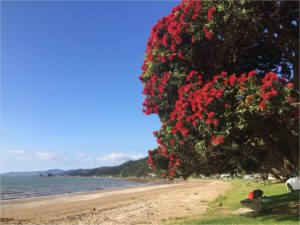 national-icon-pohutukawa
